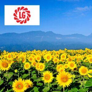 LG 56.63 CL