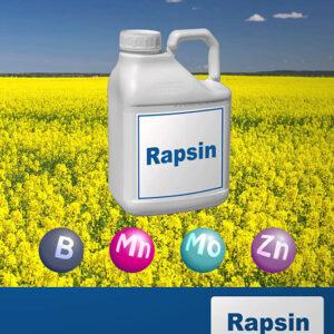 RAPSIN